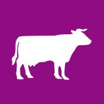 Section bovine